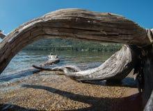 Madeira lançada à costa na linha costeira do lago Donner fotografia de stock