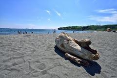 Madeira lançada à costa na praia Imagens de Stock