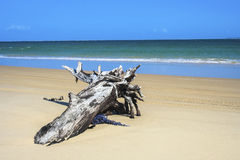 Madeira lançada à costa na praia imagem de stock royalty free