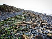 Madeira lançada à costa na praia após o tufão Fotos de Stock Royalty Free