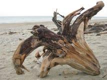 Madeira lançada à costa na praia em Haast, Nova Zelândia fotos de stock