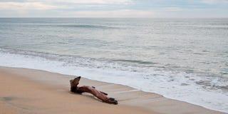 Madeira lançada à costa na praia em San Jose Del Cabo perto de Cabo San Lucas em Baja California México fotos de stock