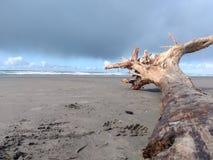 Madeira lançada à costa na praia fotografia de stock