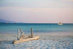 Madeira lançada à costa no crepúsculo Fotografia de Stock