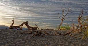 Madeira lançada à costa no Vale da Morte, Califórnia fotos de stock royalty free
