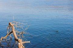 Madeira lançada à costa pelo rio imagens de stock