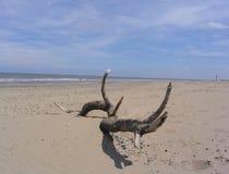 Madeira lançada à costa na praia Fotos de Stock