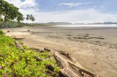 Madeira lançada à costa e flores em Misty Play Guiones Fotografia de Stock Royalty Free