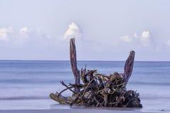 Madeira lançada à costa pacífica Fotografia de Stock Royalty Free