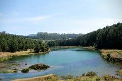 Madeira lateral do lago Imagem de Stock