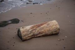 Madeira lavada em terra Fotos de Stock
