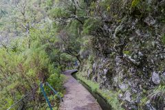 Madeira levada Lizenzfreies Stockbild
