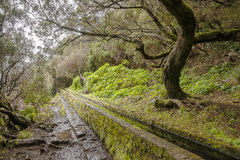 Madeira levada Lizenzfreie Stockfotos