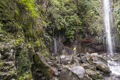 Madeira levada Stockfotografie