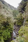 Madeira levada Lizenzfreie Stockbilder