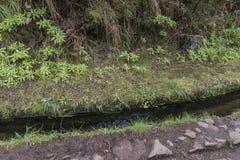 Madeira Levada, Details Lizenzfreie Stockfotografie