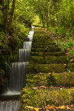 Madeira levada. Levada hiking trail on Madeira Stock Images