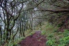 Madeira Levada stock photography