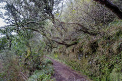 Madeira Levada Stock Photo
