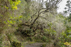 Madeira Levada royalty free stock photos