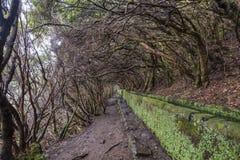 Madeira Levada Stock Photos