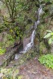 Madeira Levada Royalty Free Stock Image