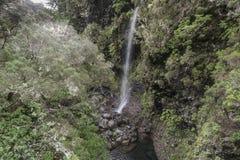 Madeira Levada Royalty Free Stock Photography