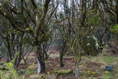 Madeira Levada, Regenwald Stockfoto