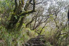 Madeira Levada, Regenwald Lizenzfreie Stockbilder
