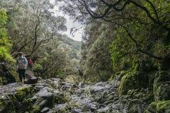 Madeira Levada und Touristen auf der Spur Lizenzfreies Stockbild