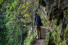 Man tourist Madeira Levada walk path scenic royalty free stock photo