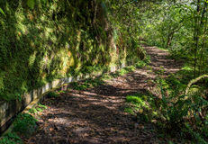 Madeira Levada walk path scenic stock photos