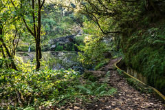 Madeira Levada walk path scenic royalty free stock photography