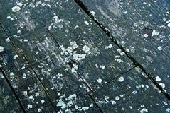 Madeira moldy velha Fotos de Stock