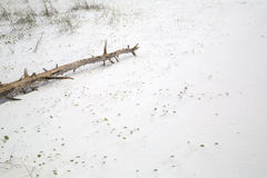 Madeira murcho no Sandy Beach Fotografia de Stock Royalty Free