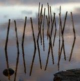 Madeira na água Imagem de Stock Royalty Free