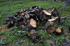 A madeira na floresta Fotos de Stock Royalty Free