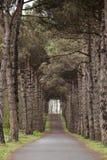 A madeira na floresta Imagens de Stock Royalty Free