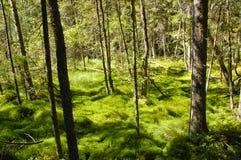 Madeira natural do musgo Imagens de Stock Royalty Free