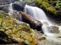 Madeira no córrego da floresta imagem de stock royalty free