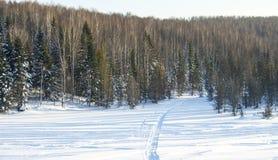 Madeira no inverno em Rússia Sibéria Fotos de Stock Royalty Free