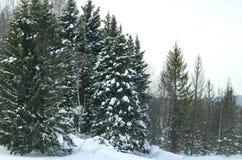 Madeira no inverno em Rússia Sibéria Foto de Stock