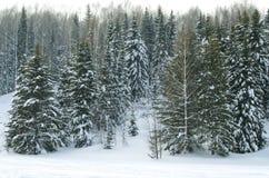 Madeira no inverno em Rússia Sibéria Imagem de Stock Royalty Free