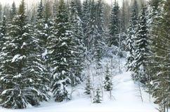 Madeira no inverno em Rússia Sibéria Imagens de Stock