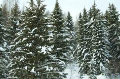 Madeira no inverno em Rússia Sibéria Fotografia de Stock