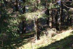Madeira no raio de sol bonito da manhã Fotografia de Stock Royalty Free
