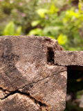madeira perfurada Foto de Stock