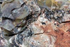 Madeira Petrified Foto de Stock Royalty Free