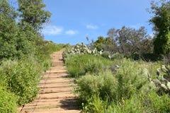 A madeira pisa Irvine Regional Park Imagens de Stock Royalty Free