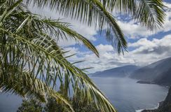 Madeira, Portugal, Europe - palm tree fronds and hills. This image shows a view of the coast in Madeira, Portugal, Europe. It was taken on a sunny day in royalty free stock photos